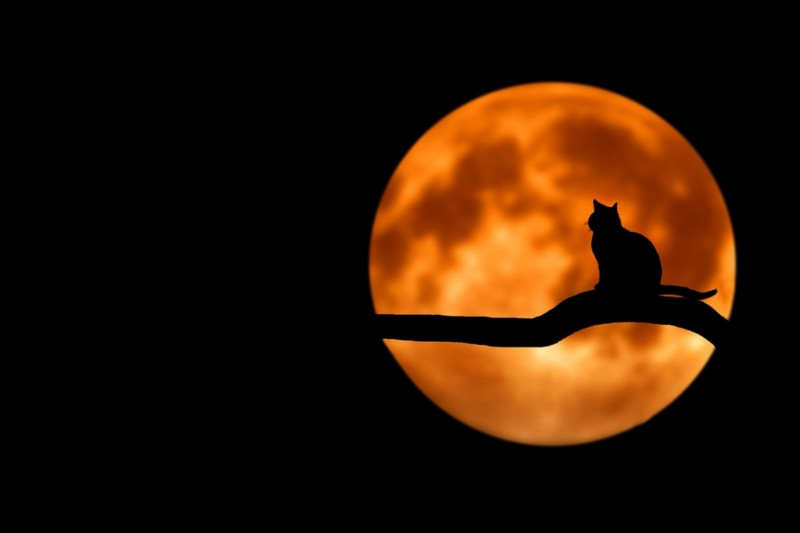 Moon and a random cat ([Pixabay](https://pixabay.com/photos/tree-cat-silhouette-moon-full-moon-736877/))